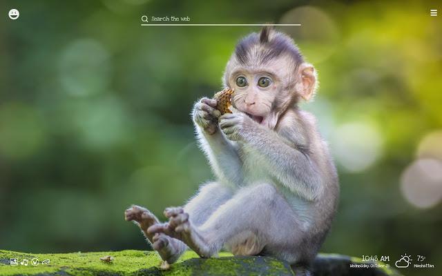 Funny Monkeys HD Wallpaper...